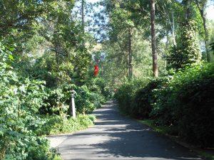 Coorg, Karnataka Dec 2011 012
