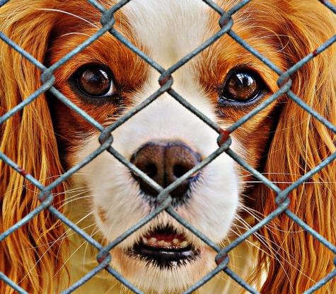 animal rescue shelter